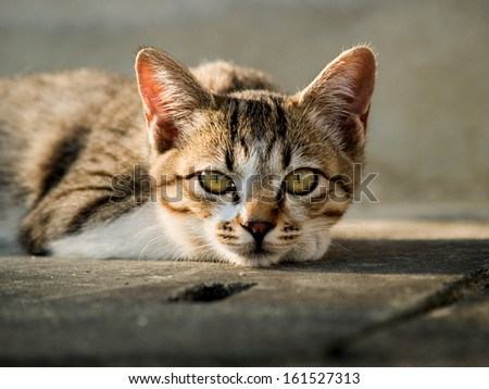 A brown striped cat staring with it's green eyes. - stock photo
