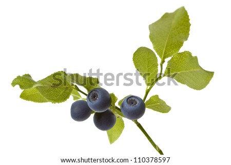A brunch of blueberries on a white background shown. - stock photo