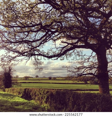 A budding tree looms over neatly kept hedges. - stock photo