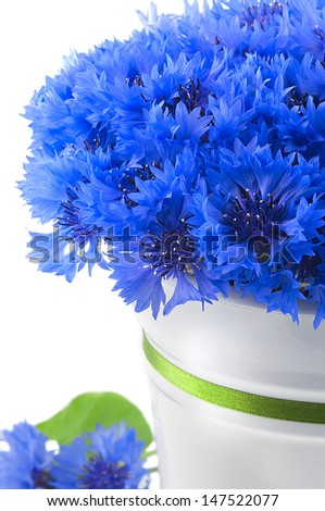A bunch of beautiful summer flower of Cornflower in the white bucket with green ribbon isolated. Concept of romantic. - stock photo