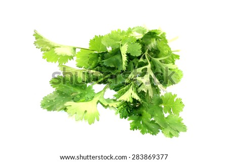 a bunch of coriander on light background - stock photo