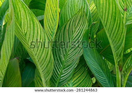A bunch of fern leaves - stock photo