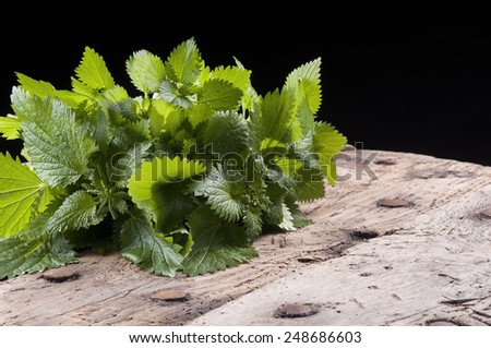 a bunch of fresh nettles, used in alternative medicine - stock photo