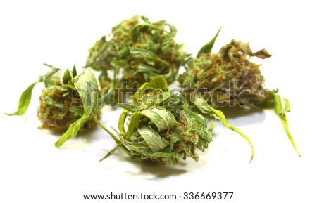 A bunch of fresh picked female marijuana buds on white - stock photo