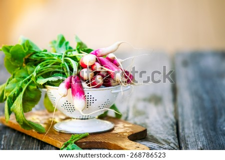 A bunch of fresh radishes in white colander   - stock photo