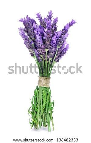 a bunch of lavender flowers tied with a string on a white background - stock photo