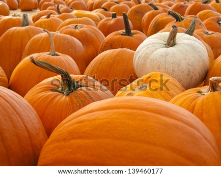 A bunch of orange pumpkins with one white pumpkin  - stock photo