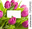 A bunch of pink tulips with business card. - stock photo