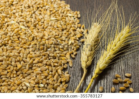 A bunch of wheat and wheat grain on a dark background - stock photo