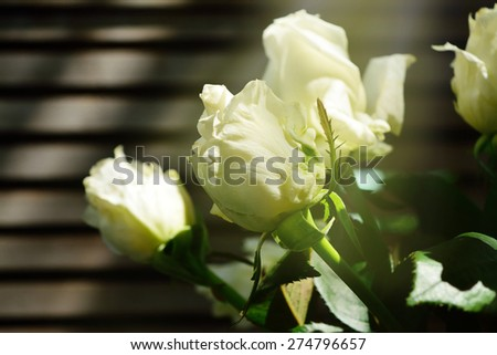 A bunch of white roses showered with sunlight in the late afternoon - stock photo