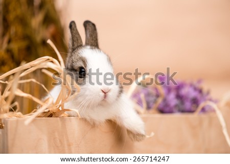 A bunny sitting in a wooden box with purple flowers looking to the right - stock photo