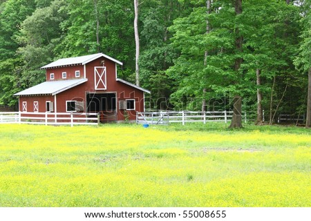 A buttercup field with a horse barn along the wood line with room for your text - stock photo