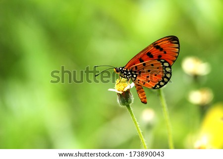 A butterfly on grass flower - stock photo