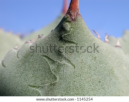 A cactus forms and abstract breast like landscape. - stock photo
