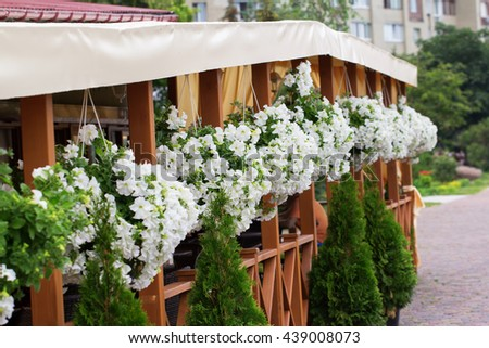 A cafe decorated by ornamental flowerpots of white petunia flowers - stock photo