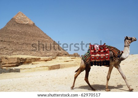 A camel ride under the iconic Great pyramid of Giza, Egypt - stock photo