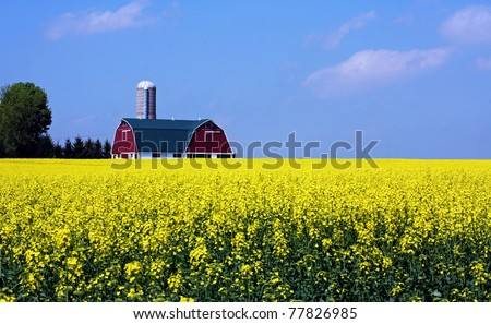 a canola farm in southwestern Ontario - stock photo