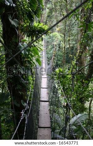 A Canopy Walk through the Brazilian Rainforest - stock photo