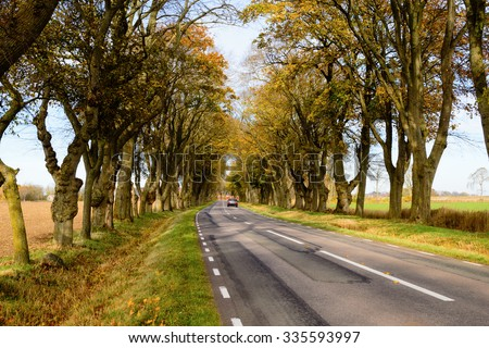 A car is driving away from you on a fine stretch of farmland tree avenue or alley in the autumn. The trees have some yellowing leaves left on them but some are already dropped to the ground. - stock photo