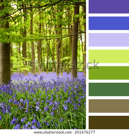 A carpet of bluebells in the woods, Hampshire, UK, in a colour palette with complimentary colour swatches - stock photo