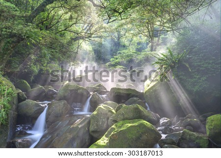 A cascading stream in a mysterious forest with sunlight shining through lush greenery  - stock photo