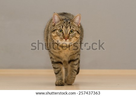 A cat comes running toward the camera and watch carefully - stock photo