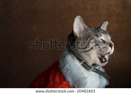 A cat dressed in Christmas clothing taking a big yawn - stock photo