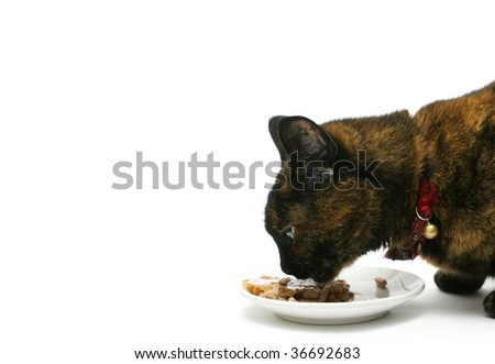 a cat eating his meal on a white background - stock photo