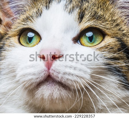 a cat eyes close up - stock photo
