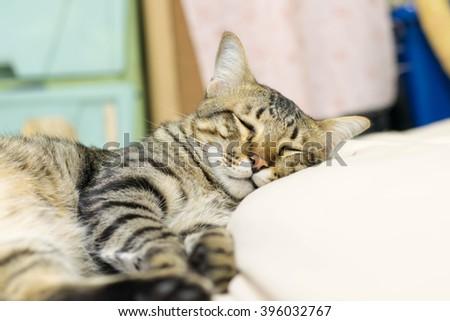 A cat happy to sleep - stock photo
