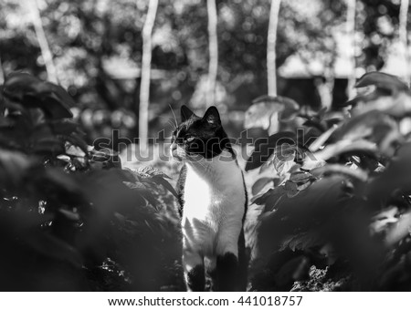 A cat has spotted something, she is on alert. - stock photo