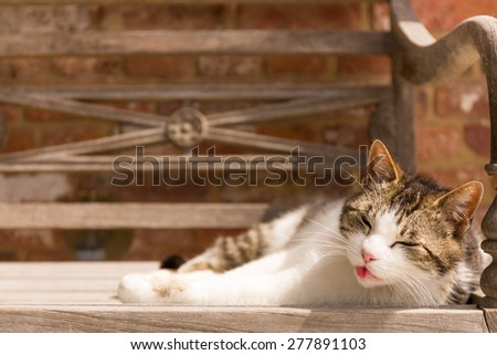 A cat is enjoying the warm sun on a wooden bench outdoors.It's tongue is sticking out. Selective focus, space for copy text - stock photo