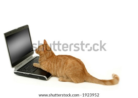 A cat is lokking at the screen - stock photo