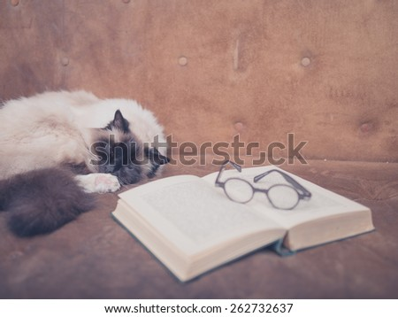 A cat is studying an open book and a pair of glasses on a sofa - stock photo