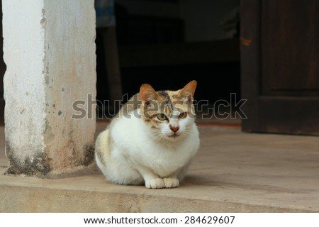 A cat is waiting in front of a Vietnamese house - stock photo