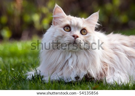 A cat lying in the grass and looking up. - stock photo