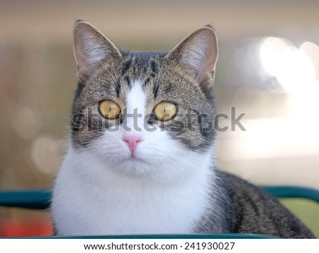 A cat observing her territory.  - stock photo