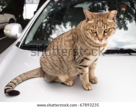 a cat on the car - stock photo