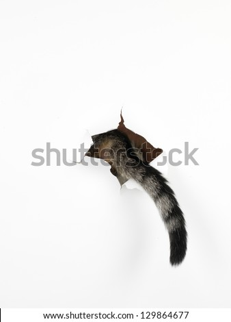 a cat's tail coming out through a hole in a white paper, isolated - stock photo