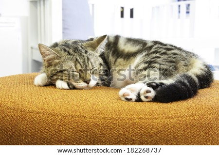 A cat sleep on orange sofa - stock photo