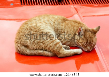 A cat sleeping on the car - stock photo