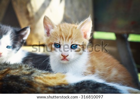 A cat with a kitten. Cute little red baby kitten. pets plays - stock photo