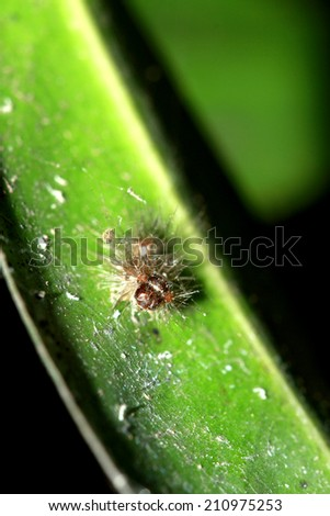 A caterpillar on leaf - stock photo