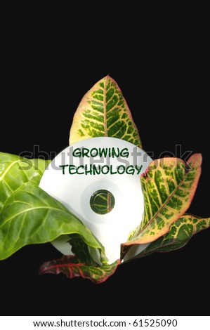 """A cd disk that says """"Growing Technology"""" resting in the middle of a tropical plant. - stock photo"""