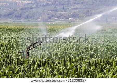 A center pivot sprinkler system watering a grain field in the fertile farm fields of Greece - stock photo