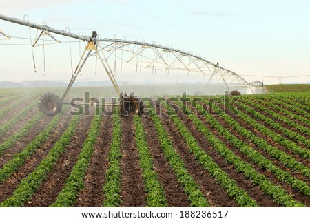 A center pivot sprinkler watering a potato field - stock photo