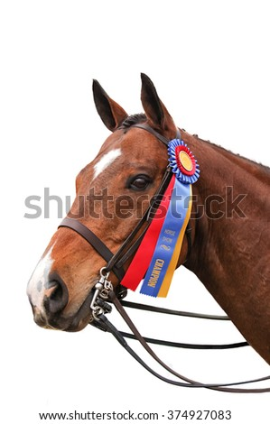 A chestnut horse with a blue and red ribbon on white background - stock photo