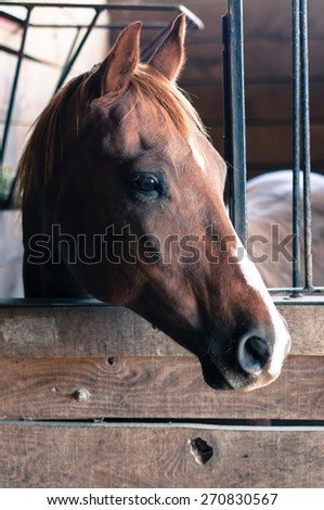 A chestnut horse with a white stripe on its nose looks out of a wooden stall box.  The horse's ears are pricked and it gazes out of the frame to the right.  A metal grill lines the top of the stall. - stock photo