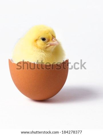 a chick sitting in an egg shell - stock photo