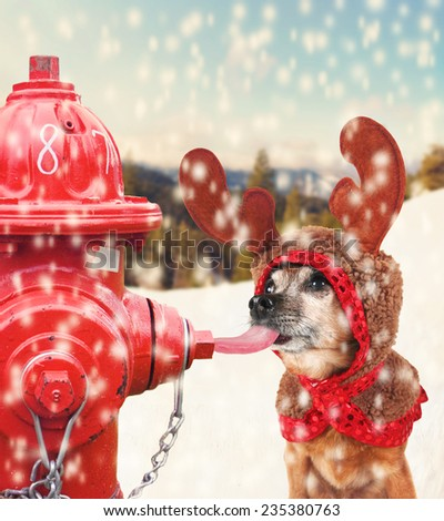 a chihuahua dressed up for christmas as a reindeer licking a frozen pole with his tongue toned with a soft instagram like filter effect - stock photo